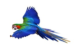 Colorful macaw parrot isolated on white background, Catalina parrot