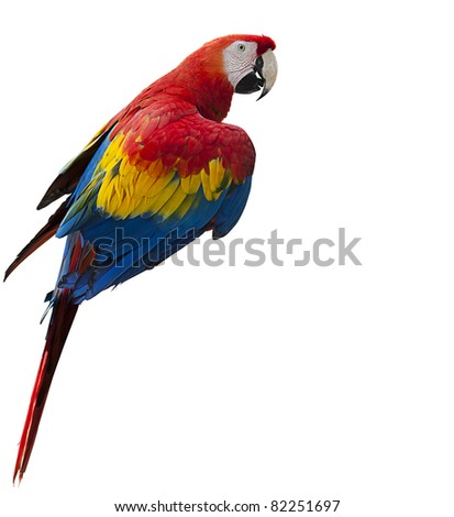 Colorful macaw parrot isolated on white background, selective focus on face