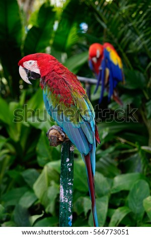 colorful macaw parrot standing on the steel branch