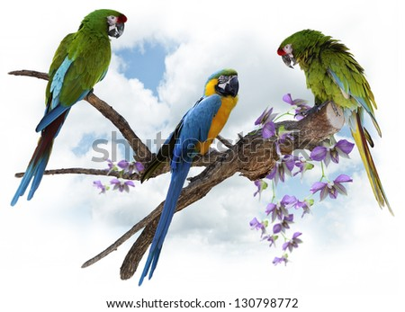 Colorful  Macaw  Parrots Perching On A Big Branch
