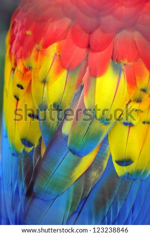 Colorful Macaw Plumage - stock photo