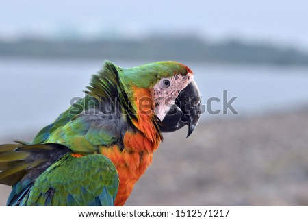 colorful macaws perched on the beach
