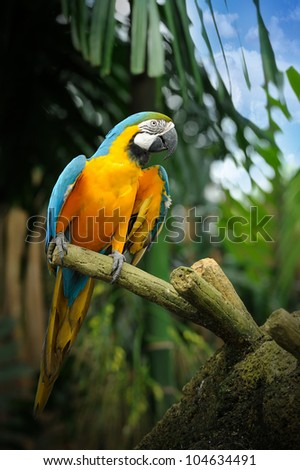 Colorful macaws, selective focus. - stock photo