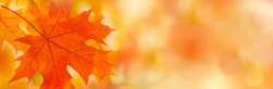 Colorful maple leaves close-up on the blurry background. Bright autumn foliage background. Fall panoramic backdrop.  Copy space for your text