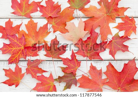 Colorful maple leaves - family of three on rustic wood board with copy space for your text.