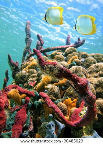 Colorful marine life and tropical fish in a coral reef under water surface of the Caribbean sea