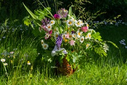Colorful meadow flower bouquet in a clay mug on a natural meadow background on a sunny day. Summer solstice bouquet in Latvia, Baltics.