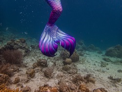 Colorful mermaid tail in a shallow coral reef