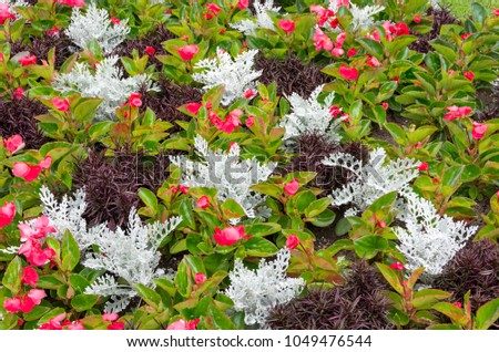 Colorful Mixed Annuals Planted in Garden #1049476544