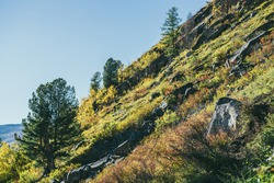 Colorful mountain landscape with wild flora in autumn colors on steep mountainside in golden sunlight. Sunny autumn scenery with steep slope with trees and vegetations in fall colors in gold sunshine.