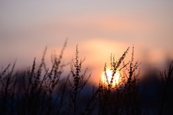 Colorful nature sunset or sunrise background. Silhouette of tree or grass branches and leaves on the field during dusk. Twilight beautiful scenic landscape wallpaper. Natural evening backdrop.