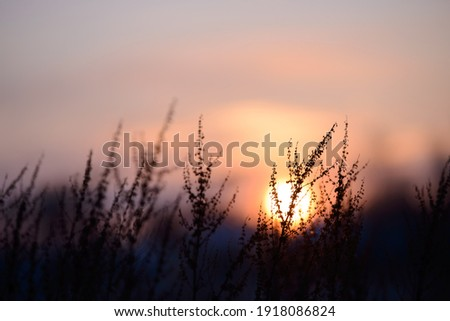 Colorful nature sunset or sunrise background. Silhouette of tree or grass branches and leaves on the field during dusk. Twilight beautiful scenic landscape wallpaper. Natural evening backdrop. Foto d'archivio ©