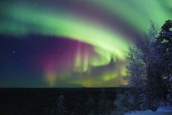 Colorful Northern lights (Aurora Borealis) with red oxygen glow above a forest. Russia, Arkhangelsk region.