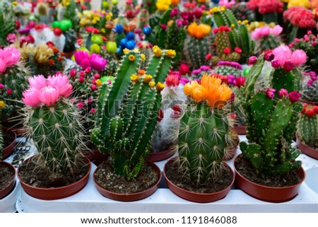 Colorful of beautiful cactus or succulents in the pot pattern background. This plant used for decoration home, office, living room or garden.