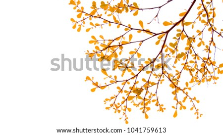 colorful of fresh leaves on white background.