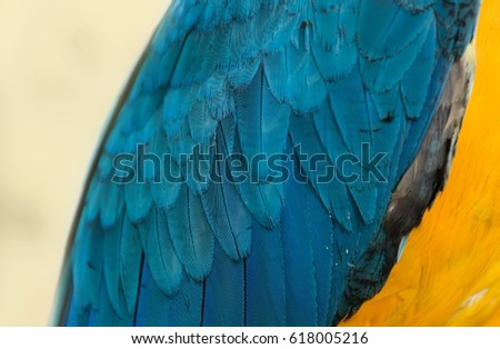 Stock Photo Colorful of macaw bird's feathers with yellow and blue shades,background and texture