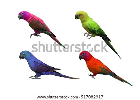 Colorful of Parrot, sun Conure, isolated on white background