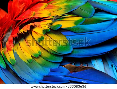 Colorful of Scarlet macaw bird\'s feathers with red yellow orange and blue shades, exotic nature background and texture