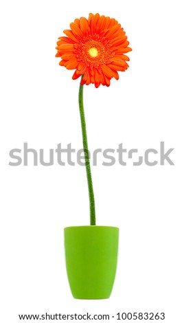 colorful orange daisy gerbera flowers in a vase