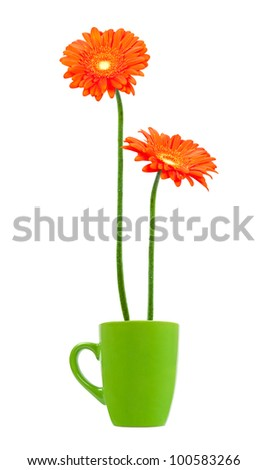 colorful orange daisy gerberas flowers in a cup