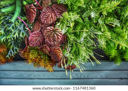 Colorful ornamental plants are grown for decorative purposes in gardens and landscape design projects, as house plants. Besides, ornamental plants play important role in human health and psychology. #1167481360