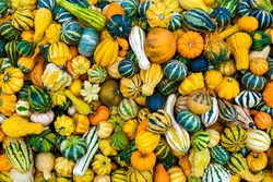 Colorful ornamental pumpkins and gourds as background, top view