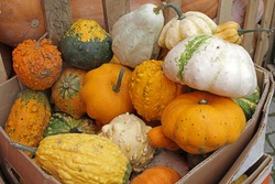 Colorful ornamental pumpkins, gourds and squashes in a box on an open market in the street. Variety of colorful ornamental gourds and pumpkins. Mini gourds for Halloween holiday.