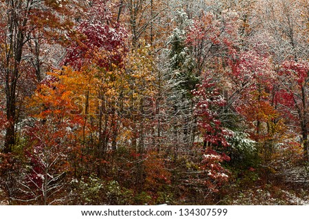 Colorful palette - first snow