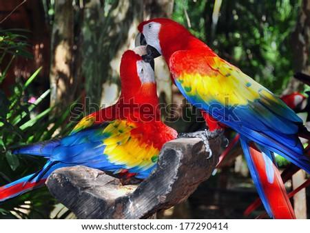 Colorful parrot  Stock fotó ©