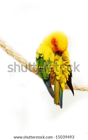 colorful parrot isolated on white background