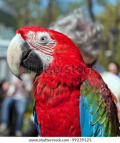 colorful parrot on blurred background
