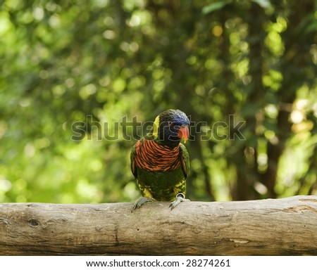 colorful parrot standing on a tree