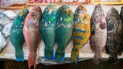 Colorful parrotfish are sold in a popular marketplace where many traditional foods can be purchased, in Taiwan. Shopping chilled Parrotfish on display in a local asian fish market.