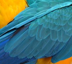 colorful parrots feathers