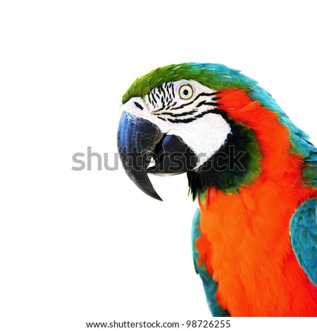 colorful parrots head closeup shot isolated on white