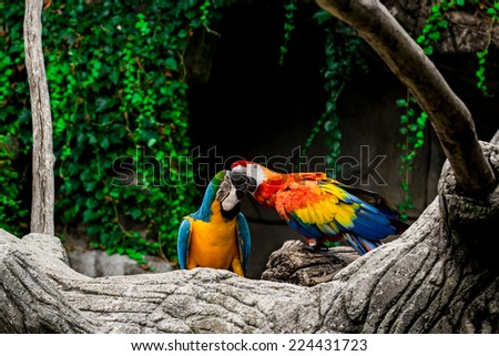 Colorful parrots in the forest