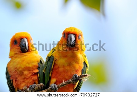 colorful parrots outdoor