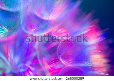 Colorful pastel background - Vivid color abstract dandelion flower - extreme closeup with soft focus, beautiful nature details. Shallow depth of field