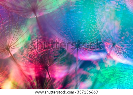 Colorful pastel background - Vivid color abstract dandelion flower - extreme closeup with soft focus, beautiful nature details, very shallow depth of field
