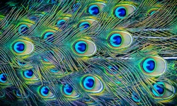 Colorful patterns of thousands of beautiful birds.