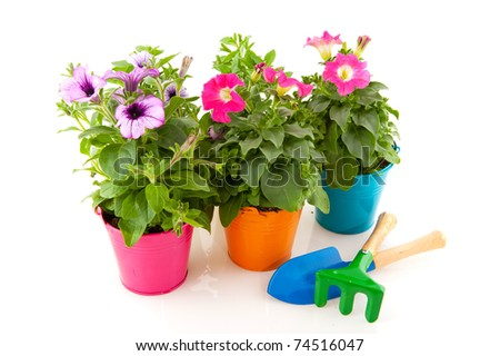 colorful Petunias in little buckets with garden equipment