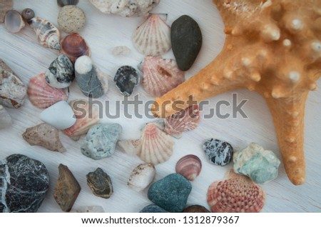 Colorful picture with a lot of pink seashells and a brown starfish. Close-up. The top view. Natural elements.