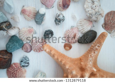 Colorful picture with a lot of seashells and stones. Nice brown starfish. Close-up. The top view. Bright background elements.