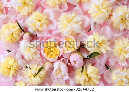 yellow flowers background. yellow flowers background