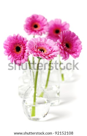 colorful pink daisy gerbera flowers in  vases