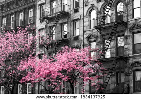 Colorful pink trees blooming outside of old buildings in black and white - 3rd Avenue in Midtown Manhattan, New York City NYC