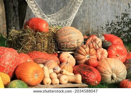 Colorful pumkins. Autumn Backgraund. Halloween. Vegetables market Photo stock ©