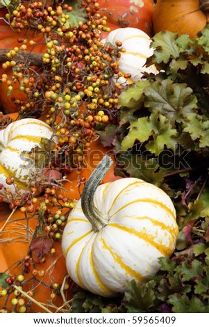 Colorful pumpkins and fall decor - stock photo