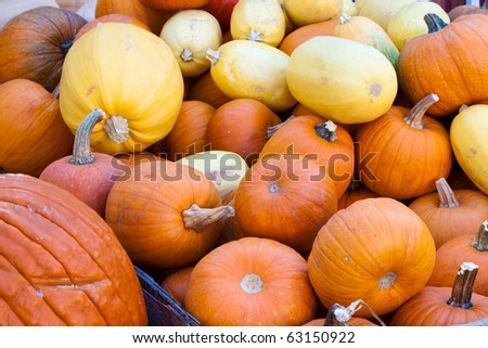 Colorful Pumpkins and Squash