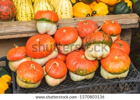Colorful pumpkins at the market in Tbilisi. Different varieties of pumpkin. The texture of a variety of melons.